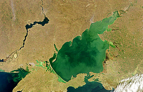 Sea of Azov Sattelite Image